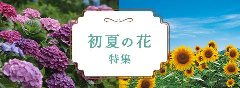 初夏の花特集
